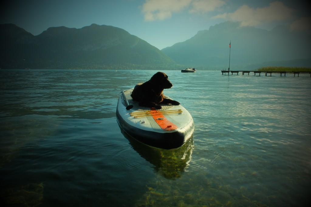 promenade en paddle avec son chien